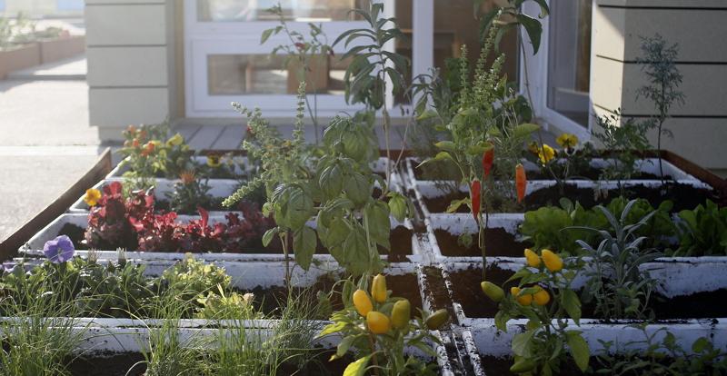 C mo hacer un huerto urbano en tu propio hogar zolvers blog - Como hacer un huerto urbano ...